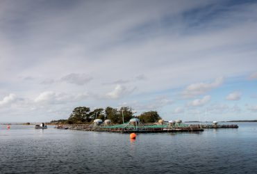 Kala-altaille kehitetty harmaahylkeen vangitsemislaite käyttöön