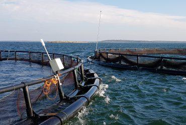Kalankasvatusta halutaan lisätä valtion vesialueilla
