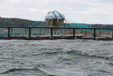 Ilmastonmuutos koskee kala-alaakin