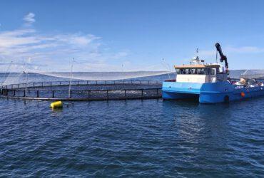 Kuluttajatutkimus: kalanviljelyn ympäristöystävällisyys tunnetaan huonosti